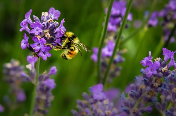 Carson Meredith talks bees and adhesives